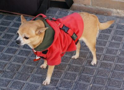 Koira Malagassa