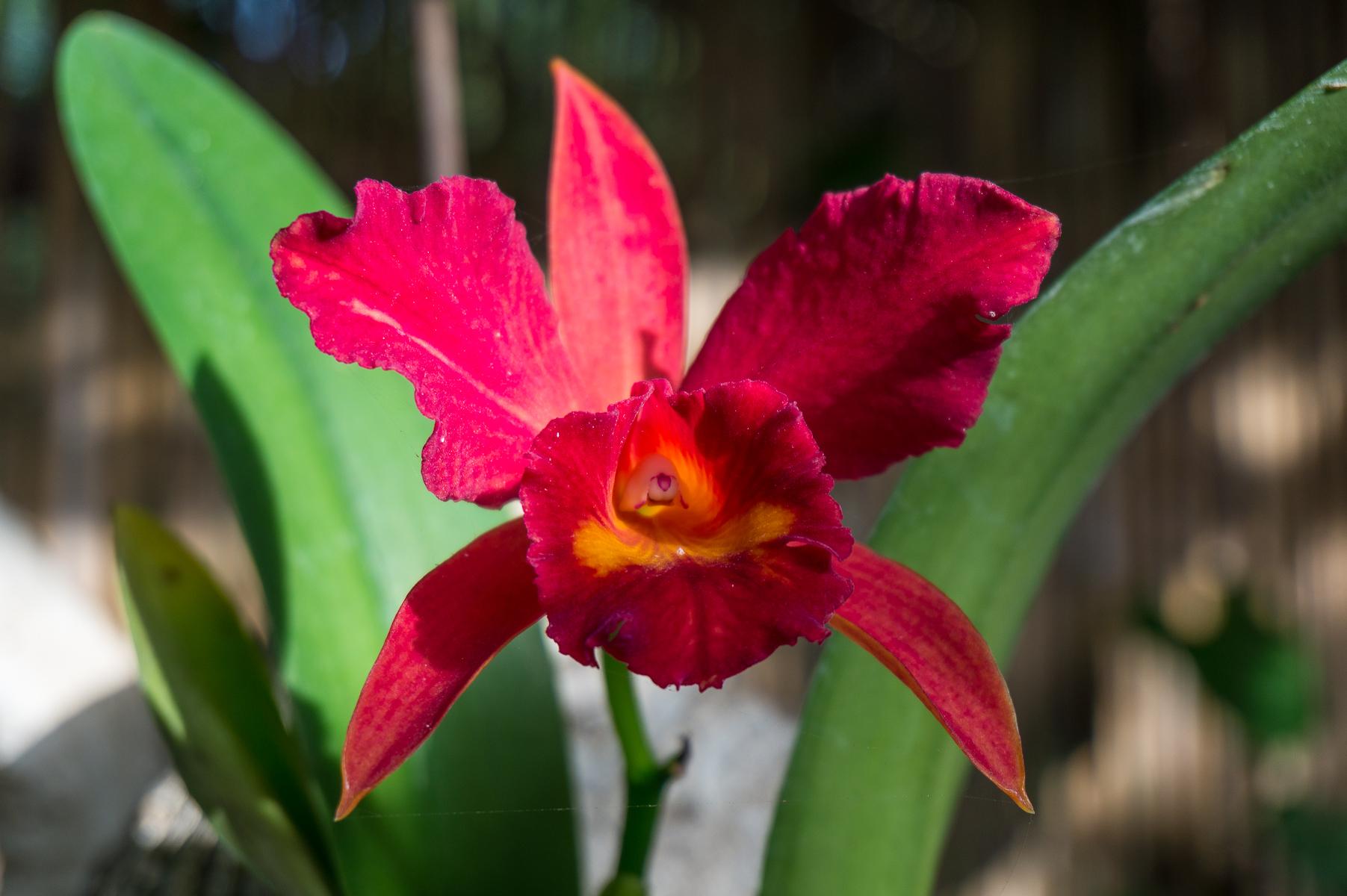 Orkideapuutarha, Puerto de la Cruz