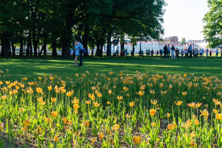 Aleksanterin puisto, Pietari