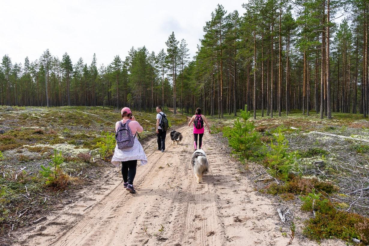 Siiponjoen luontopolku, Kalajoki