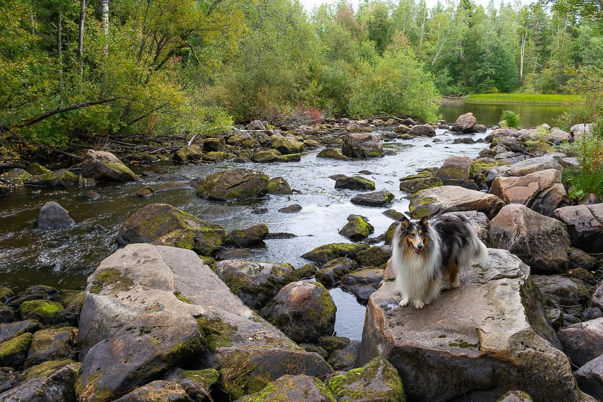 Nomi ja Siiponjoki, Kalajoki