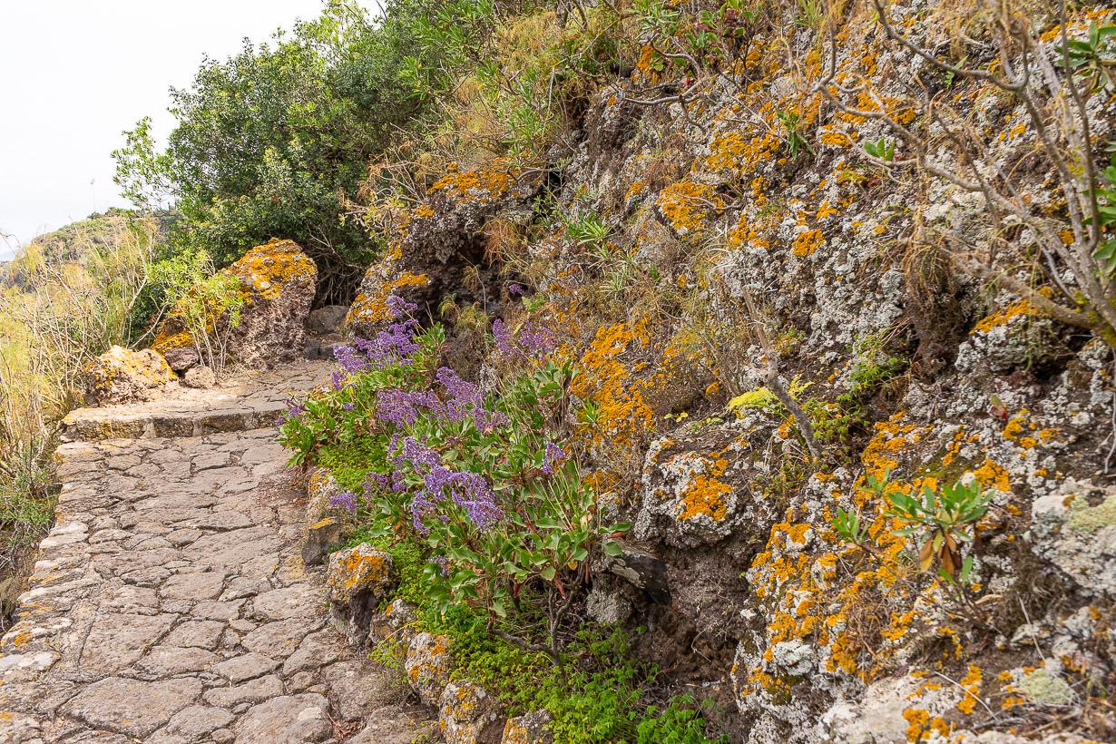 Kasvitieteellinen puutarha Viera y Clavijo, Gran Canaria, rinnepolku