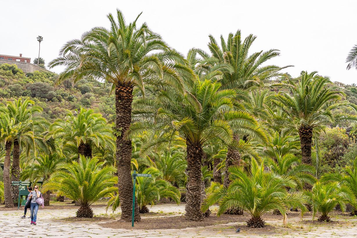 Kasvitieteellinen puutarha Viera y Clavijo, Gran Canaria, kanariantaateli