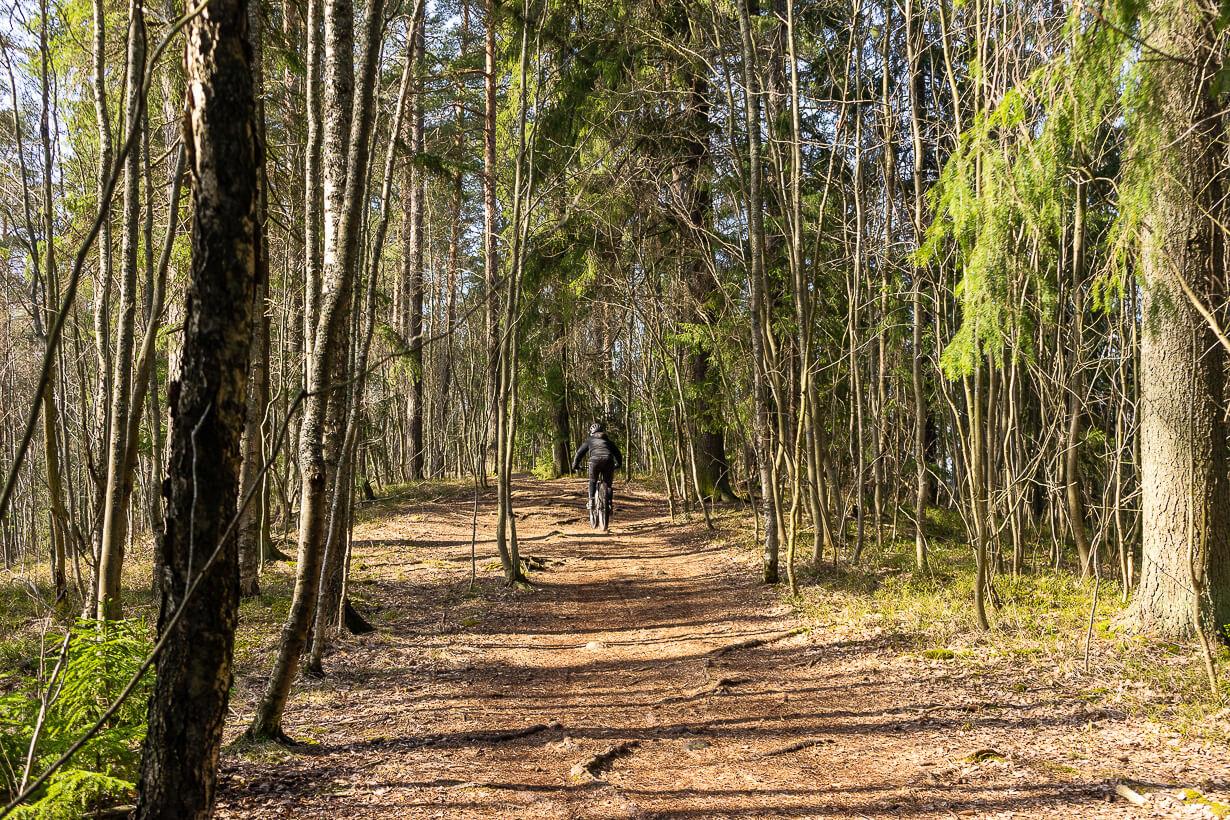 Maastopyöräilijä Maatialanharjun luontopolulla keväällä, Nokia