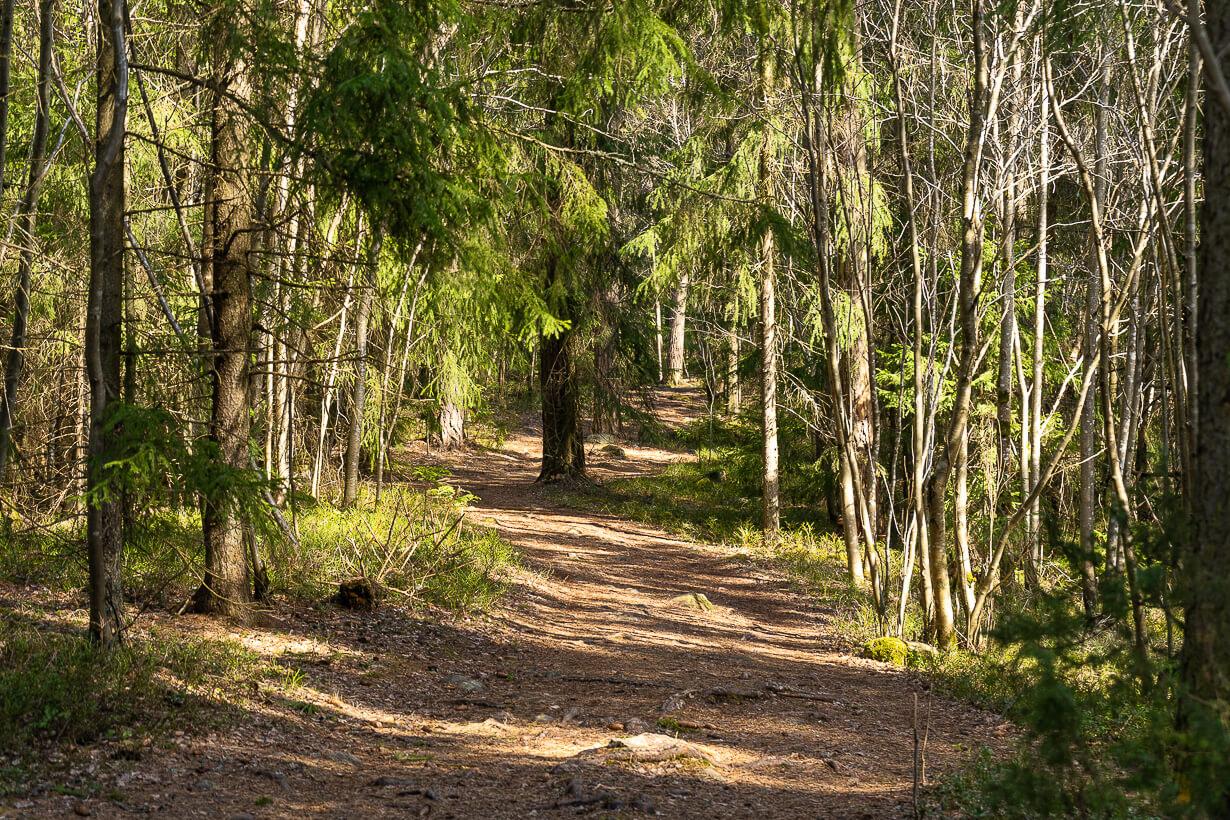 Maatiaisharjun päällä kulkevaa luontopolkua Nokialla