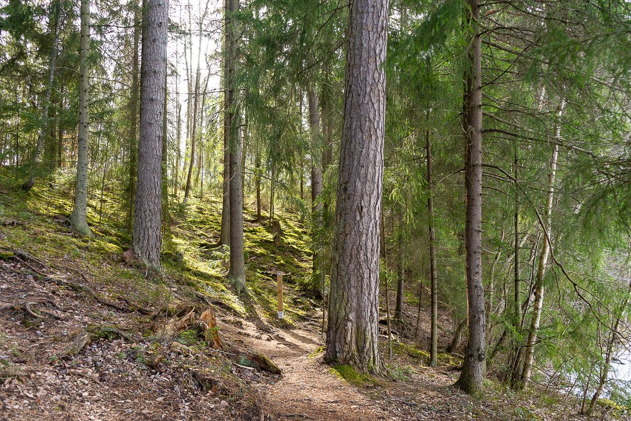 Maatialanharjun luontopolku keväällä, Nokia