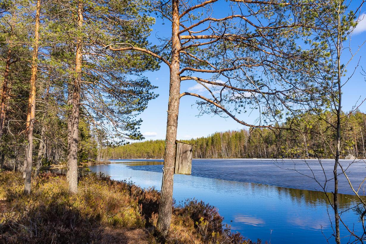 Linnunpönttö Kivikeskun luontopolulla Nokialla