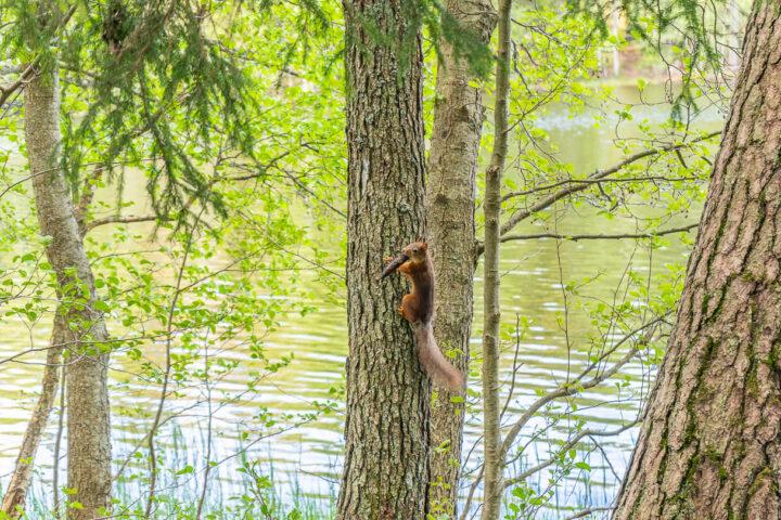 Orava, Suolijärven luontopolku