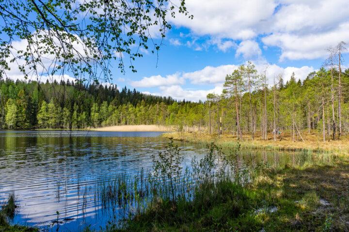 Suolijärvi ja suo