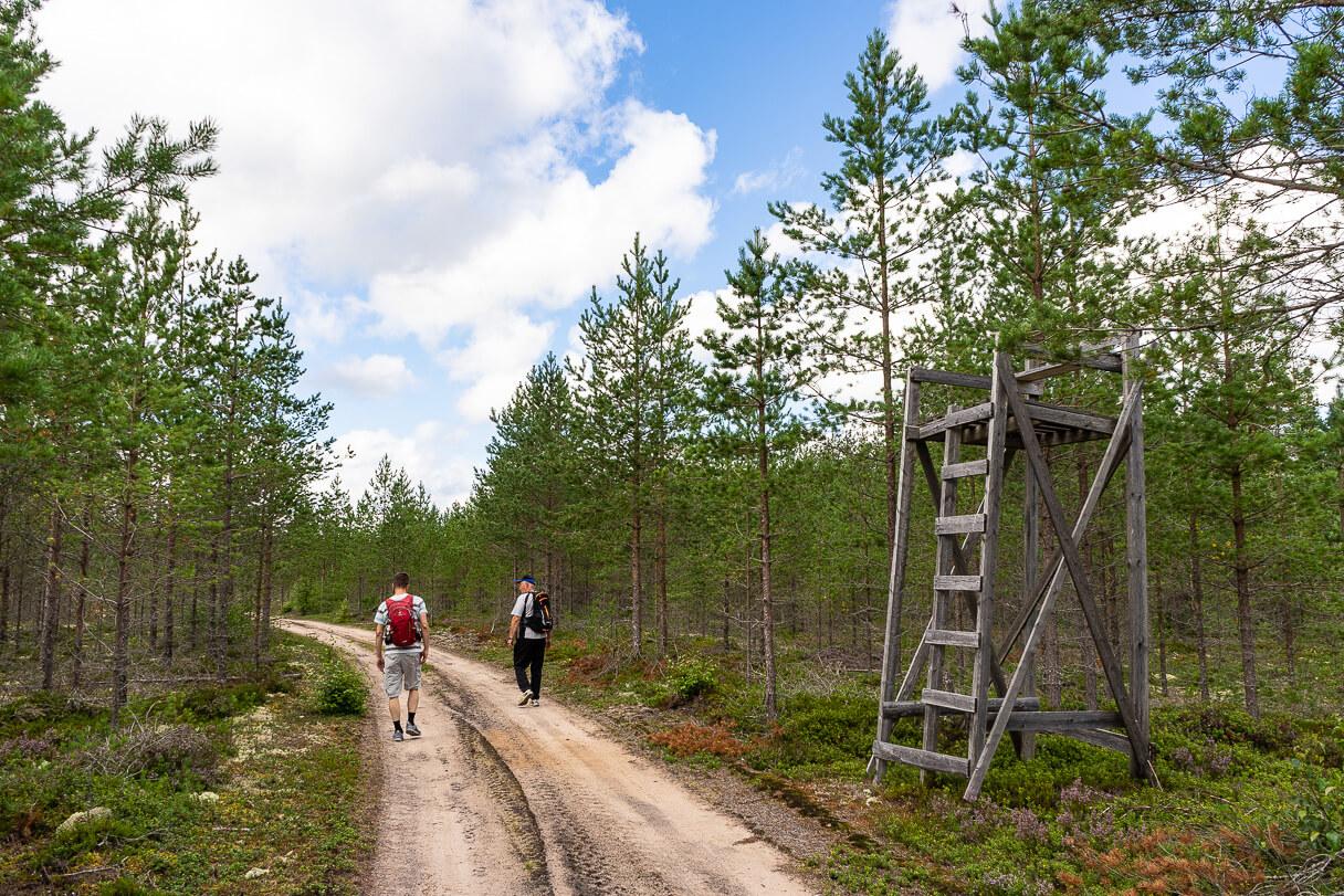 Hirvitorni Pitkäjärven maastossa