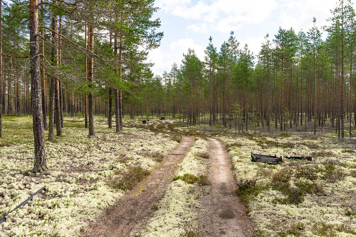 Pitkäjärven patikointi, Kalajoki