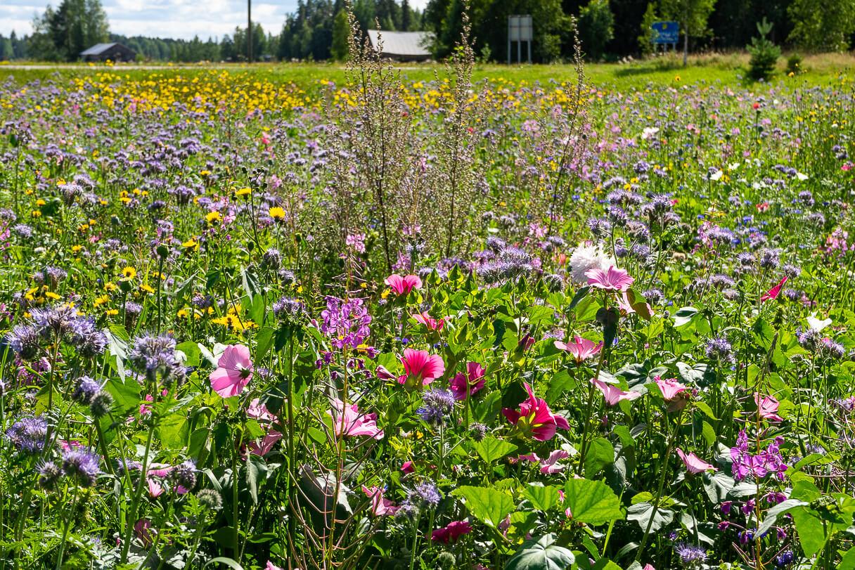 Matkailuvuosi 2020: Kiikosten kukkapelto, Sastamala