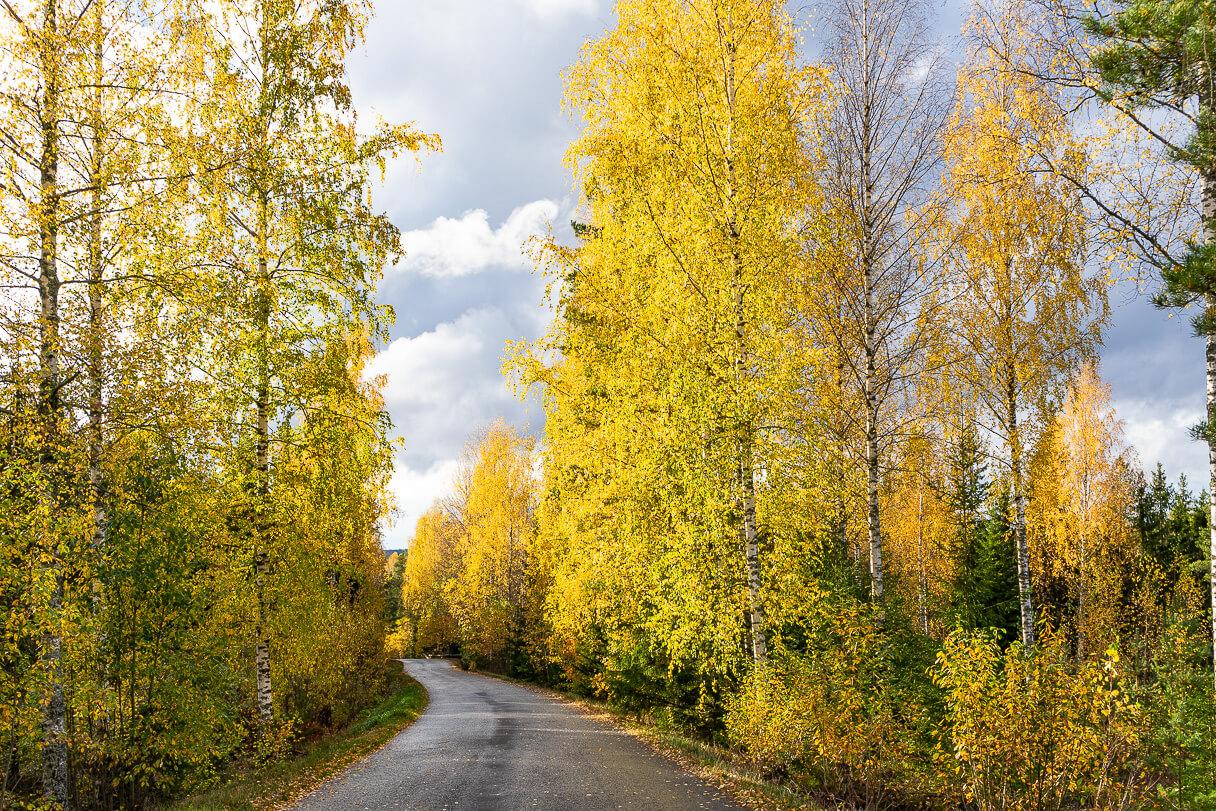Tie Haralanharjun näkötornille syksyllä ruskan aikaan.