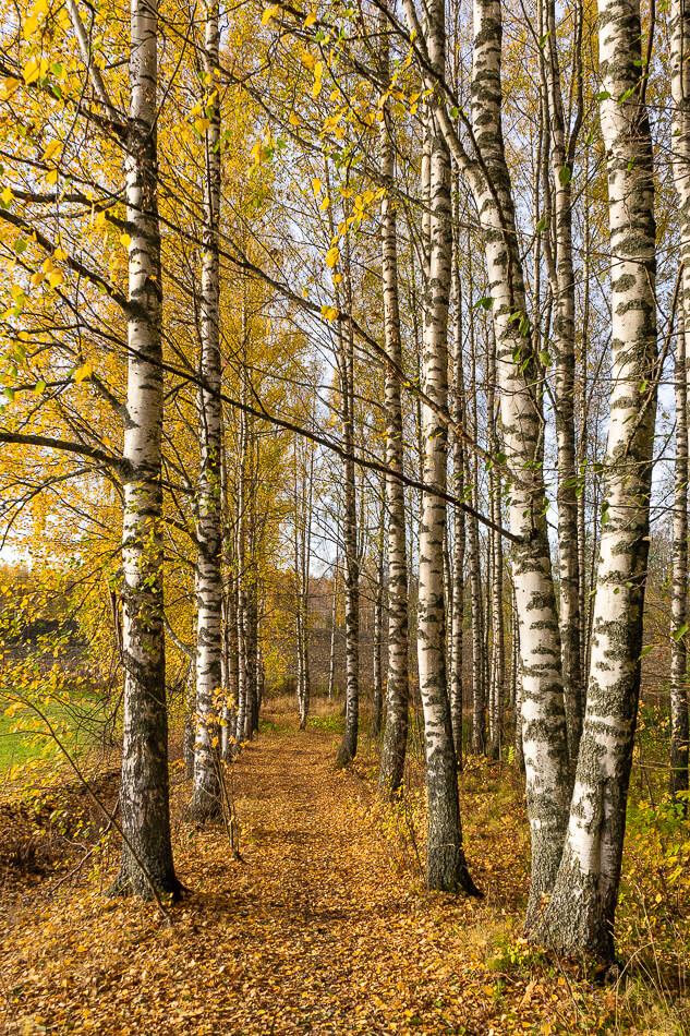 Koivukuja Kirkkkojärven luontopolulla