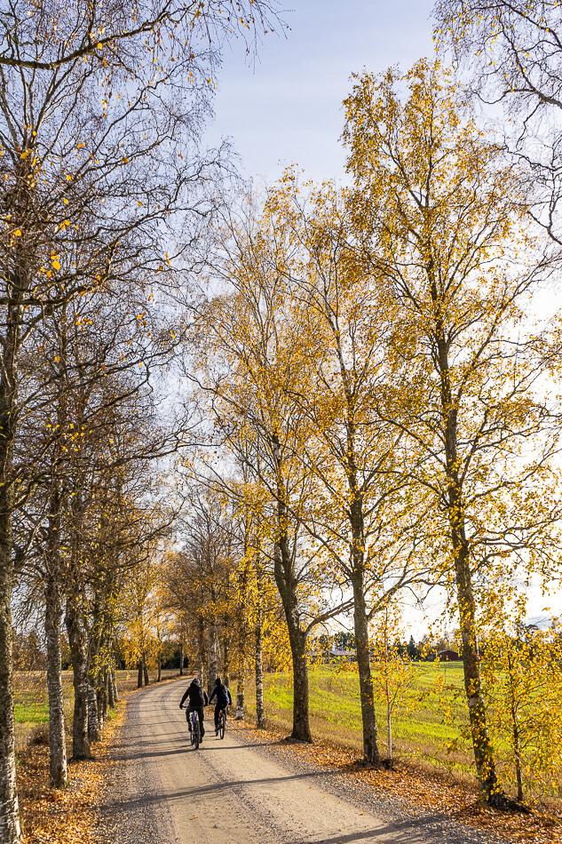 Liuksialankujan pyöräilijä, Kirkkojärven luontopolku, Kangasala
