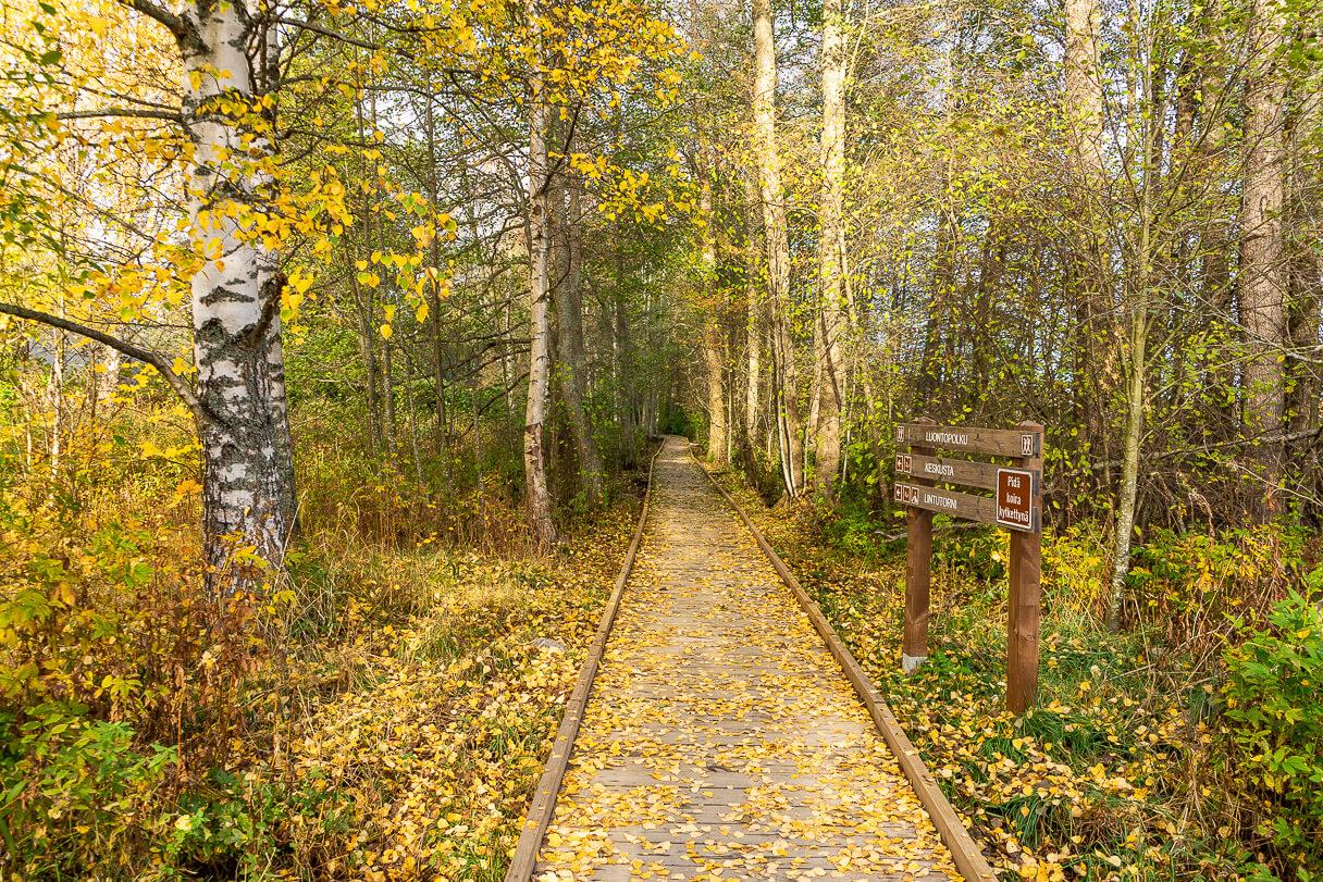 Kirkkojärven luontopolku syksyllä, Kangasala